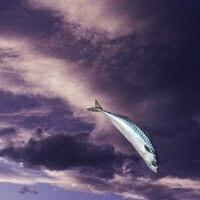 Titus Fish & Sky.3 (1)